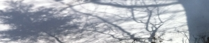 chagall-backdrop4.jpg